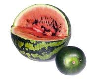 Två vatten-melon av dwarfish olika kvaliteter - som är stora och, litet djup av skärpa, fokus på en skorpa av en stor vatten-melo Royaltyfria Bilder