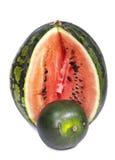 Två vatten-melon av dwarfish olika kvaliteter - som är stora och, litet djup av skärpa, fokus på en skorpa av en stor vatten-melo Arkivfoto