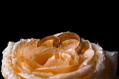 Två vigselringar på en gul ros på en svart bakgrund Den gula rosen i vatten tappar närbild dagg steg Blommor som en gåva för arkivbild