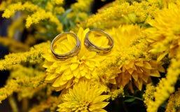 Två vigselringar på gula blommor Royaltyfri Bild