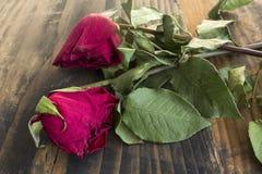 Två vissnade rosor Arkivfoton
