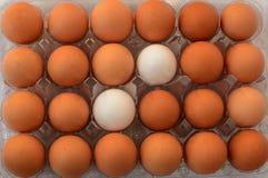 Två vita ägg mellan andra bruna ägg Arkivbild