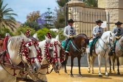 Två vita andalusian hästar med 3 jockey till rearRegistrar versió n: royaltyfri foto