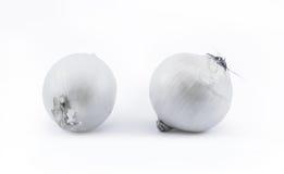 Två vita lökar på en vit bakgrund - främre sikt Royaltyfri Foto