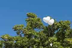 Två vita luftballonger på träd Arkivbild