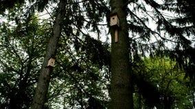 Två voljärer på granträden lager videofilmer