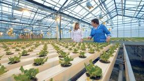 Två yrkesmässiga trädgårdsmästarekontrollkrukor i ett växthus 4K stock video