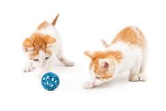 Två ystra kattungar som spelar med leksaken Royaltyfria Bilder