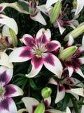 Tvåfärgad blomma arkivbild