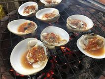 Tvåskaligt skaldjur som är bekant som den Geloina för larn för hoypokkoh spen Thailändskt lokalt royaltyfria foton