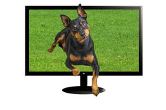 TV 3 D with dog Royalty Free Stock Images
