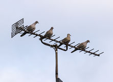 TV antenna or aerial with four doves Stock Photo