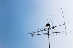 TV-antenne Stock Fotografie
