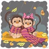 Två apor i en halsduk Arkivfoto
