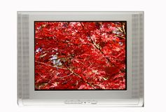 TV and Autumn Display Royalty Free Stock Photo