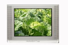 TV and clear cabbage display Stock Photo