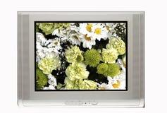 TV et fleurs blanches Photos stock