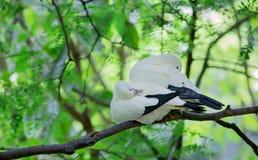 Två fåglar kan sova på filialen på den tropiska regnskogen Royaltyfria Foton