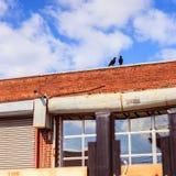 Två fåglar överst av en byggnad för röd tegelsten Arkivfoto