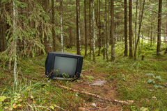 TV in a forest Royalty Free Stock Image