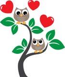 Två förälskade söta ugglor Arkivfoton