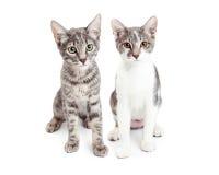 Två gulliga Grey Kittens Siting Together Arkivfoto
