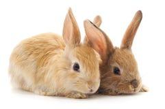 Tv? h?rliga kaniner arkivfoton