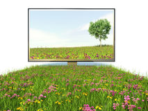 TV and high-quality technology, nature.  Stock Photos
