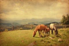 Två hästar och föl i äng. Royaltyfri Foto