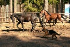Två hästar och hund Royaltyfria Bilder