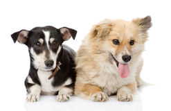 Två hundkapplöpning som tillsammans ligger Arkivfoton