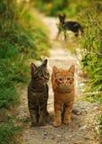 Två katter Arkivbild
