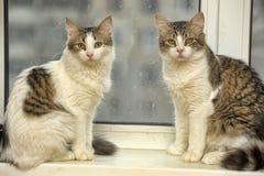 Två katter på fönsterbrädan Royaltyfri Fotografi