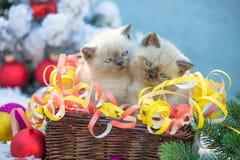 Tv? kattungar i en korg med julgarnering arkivbild