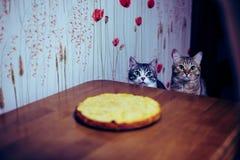 Tv? kattungar sitter framme av tabellen royaltyfri fotografi