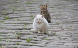 Två lösa katter Royaltyfria Bilder