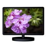 TV met bloem Stock Fotografie