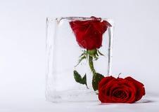 Två rosor i is Arkivbild