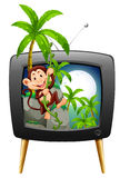 TV screen with monkey on the tree Royalty Free Stock Photography