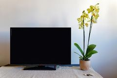 Tv set and orchid Royalty Free Stock Image