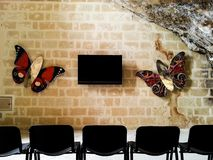 TV som hänger på en tegelstenvägg som omges av fjärilar i en forntida grotta royaltyfria foton