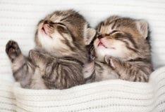 Två som sover, behandla som ett barn kattungen Arkivbilder