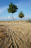 Två träd i bakgrund och väg för blå himmel Arkivfoto