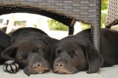 Två valpar som sover i trädgård Arkivbild