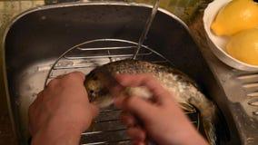 Tvagning och lokalvård av fisken arkivfilmer