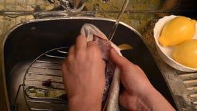 Tvagning och lokalvård av fisken lager videofilmer