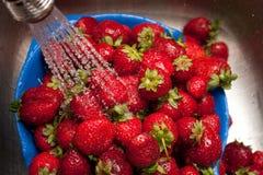 Tvagningstarwberries fotografering för bildbyråer