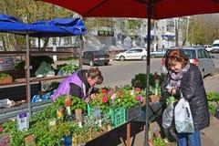 Tver, Rusia - pueden 07 2017 Comercio de la calle en brotes de la flor Foto de archivo libre de regalías