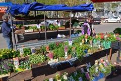 Tver Ryssland - kan 07 2017 Gatahandel i blommagroddar arkivbild