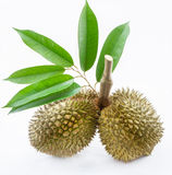 Tvilling- Durian Royaltyfri Foto